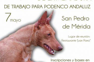 La IV Copa de Extremadura de Trabajo para Podenco Andaluz se celebraré el día de mayo en San Pedro de Merida.