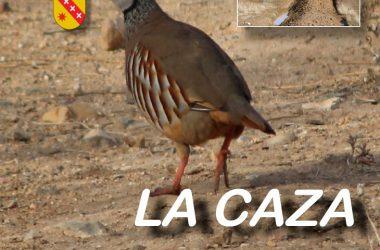 Cartel de las XIV Jornadas Cinegéticas de Castilla-La Mancha que se celebrarán con el nombre de La Caza Sostenible.