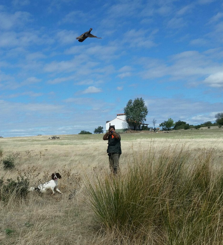 Un cazador apunta a una perdiz levantada por su perro de caza.