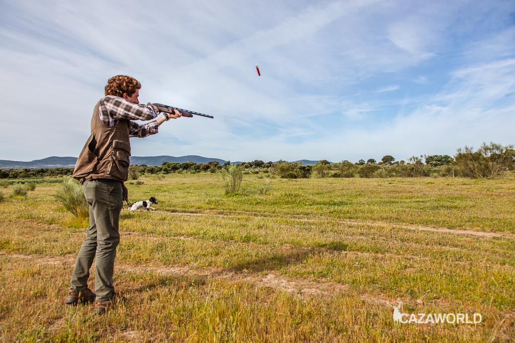 En la fotografía el cazador dispara a una codorniz levantada por el perro con la Beretta A400 Xplor Action.