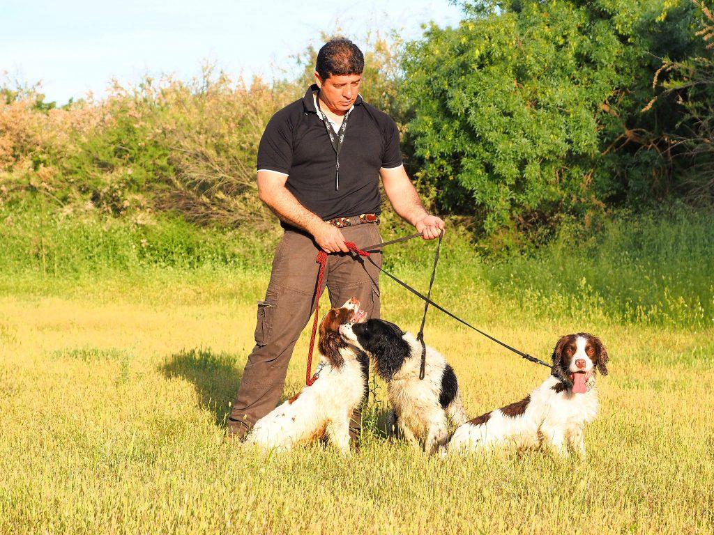 Carlos Tiburcio springer iniciación del cachorro de caza