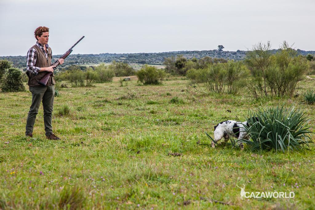 Iniciación del cachorro en la caza con piezas de granja 8 springer cazador