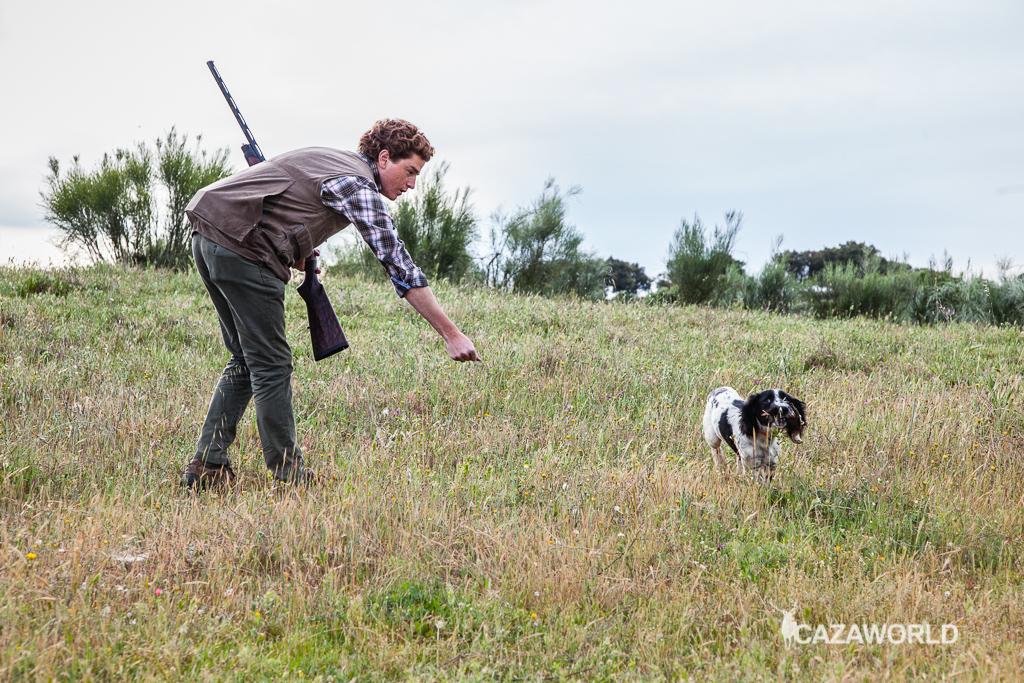 Iniciación del cachorro en la caza con piezas de granja 3 springer cazador