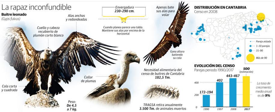 Gráfico sobre el buitre leonado y sus características / David Vázquez Mata