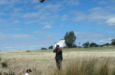 Un cazador levanta una perdiz roja levantada por su perro de caza momentos antes.