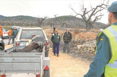 Imagen de una batida especial de jabalíes, que tuvo lugar el pasado año en el término de Cabanes, con la supervisión de agentes del Seprona. / BOIA