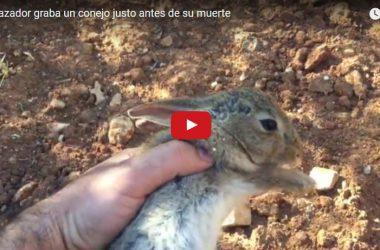 Un conejo que pese a estar aparentemente saludable está al borde de la muerte por la enfermedad hemorrágica.