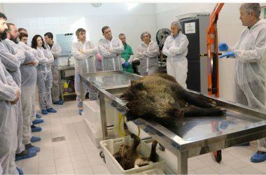 Aproca formará a cazadores en la conservación de aves necrófagas a través de un manual.