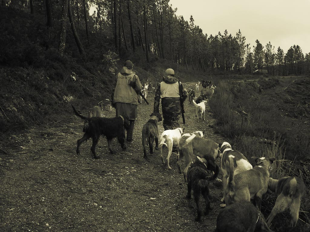 Cazadores y perros para la caza del jabalí en Galicia / F. Chan