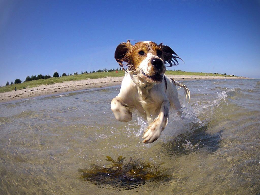 Un perro saltando en el mar.