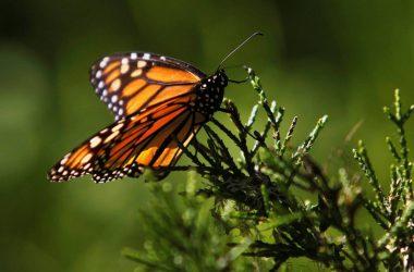 La transformación y destrucción del hábitat es sistemáticamente señalada en todos los estudios como la principal causa de esta hecatombe. Michael Fiala / Reuters -Cordon Press
