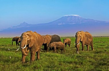 Cada 45 minutos, se mata un elefante en Africa, según un informe del WWF. / WWF