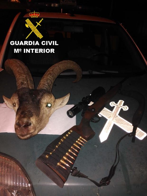 Cabeza de macho montés incautada por los agentes de la Guardia Civil / La Voz
