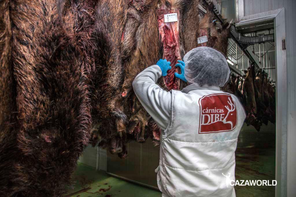 Un empleado de Cárnicas Dibe manipulando jabalíes en la industria cárnica.