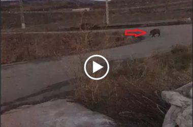 Una manada de jabalíes provoca un accidente de tráfico.