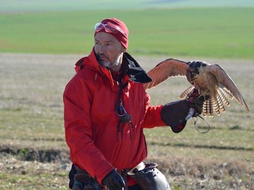 Un cetrero y su halcón peregrino en competición.