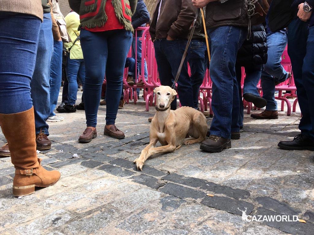 Algunos cazadores han llevado a sus perros a las concentraciones. #sialacaza