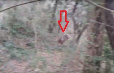 Fotografía de un corzo que pasa a la carrera a pocos metros del cazador.
