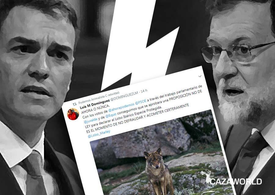 Animalistas esperan que se apruebe la moción de censura para proteger al lobo