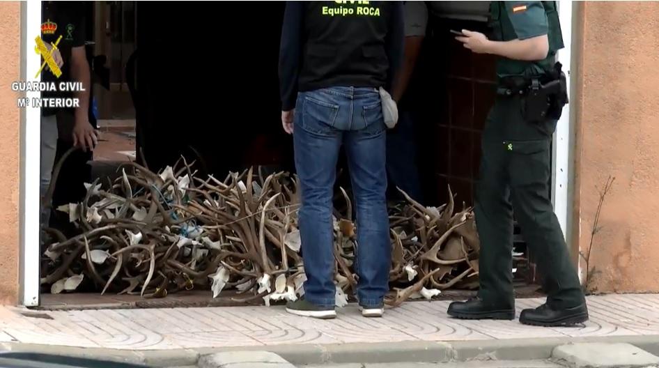 Las astas de ciervo y gamo recuperadas por la Guardia Civil.