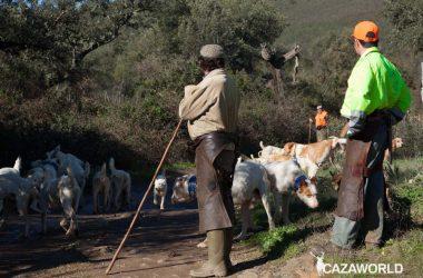 Dos rehaleros junto a sus perros de rehala en una montería