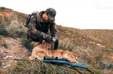 Hembra de cabra montés cazada por gestión durante la prueba de un Mauser M18.