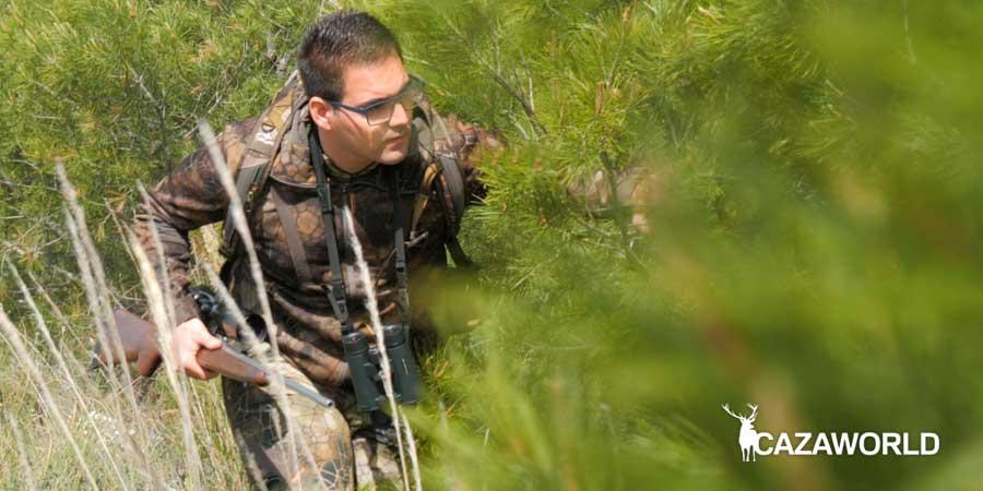 Cazador recechando detrás de unos pinos