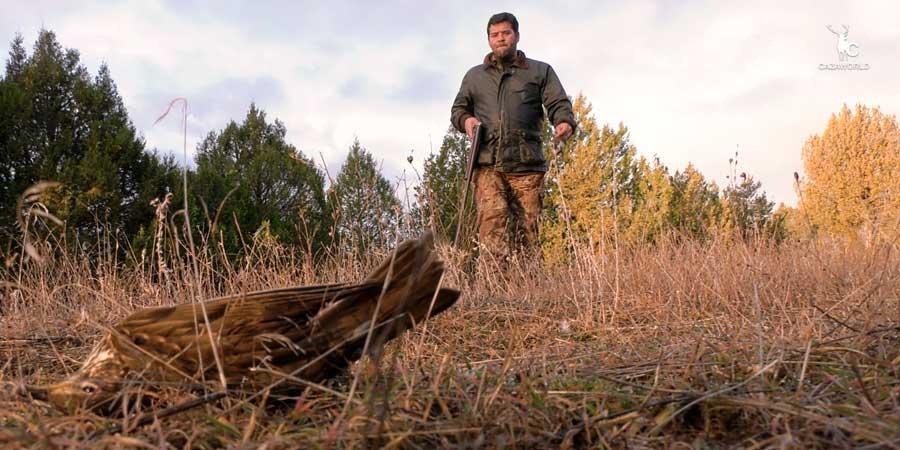 Un cazador cobra un zorzal común abatido