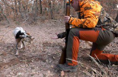 Miguel Ángel Valdivielso cobrando una becada cazada junto a su perro Bruce de Castriello.