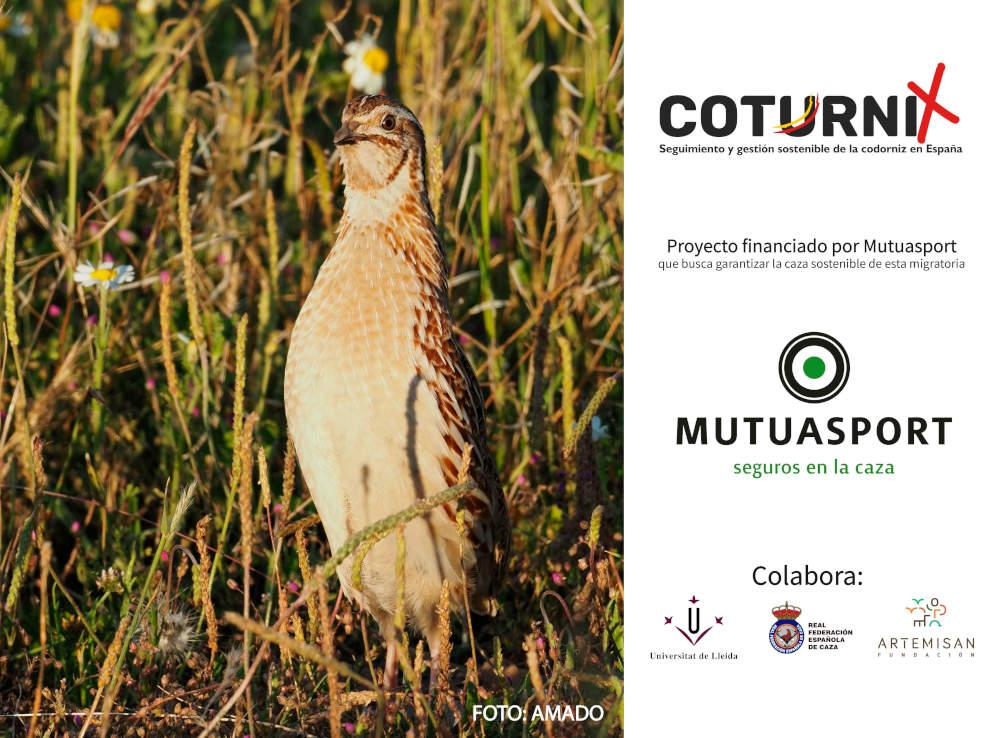 Imagen del proyecto Coturnix
