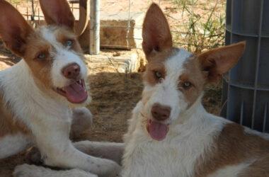 Imagen de perros de caza
