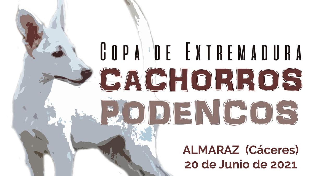 copa-cachorros-podenco-Extremadura