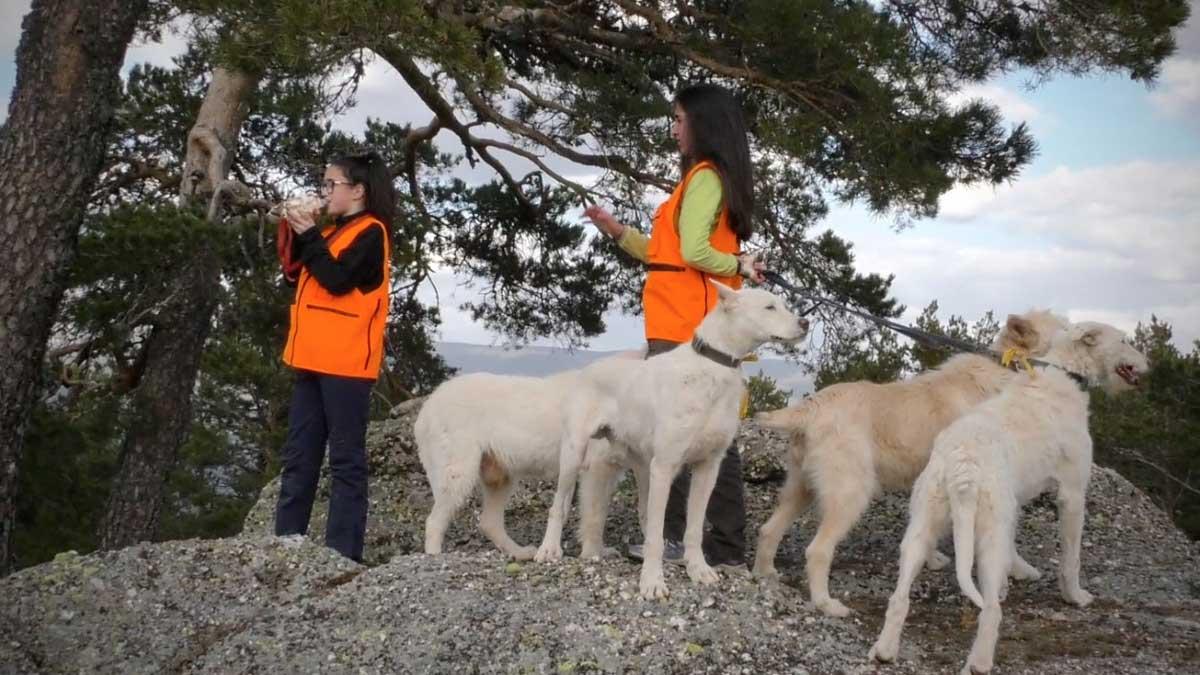 Rehala, cazadoras con perros