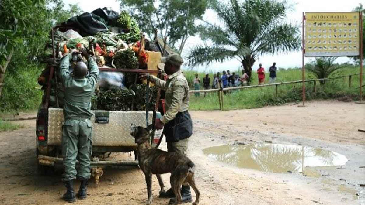 Unidad Canina Congo furtivos marfil