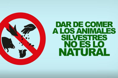 campaña-no-des-de-comer-a-los-animales-silvestres-1