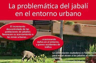 jabalí en áreas urbanas Madrid