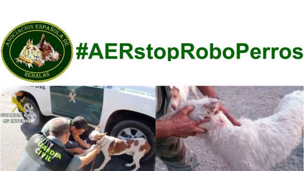 robo de perros AER