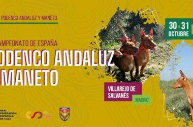 Campeonato de España de Podenco Andaluz y Maneto